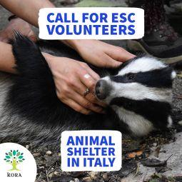 Brīvprātīgā darba iespēja dzīvnieku patversmē Itālijā!